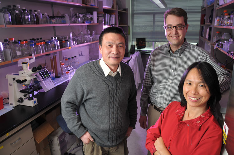 Pre-treating bladder cancer cells increases chemotherapy effectiveness, Cancer Center lab finds